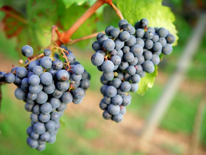 Điểm danh 4 loại trái cây gây nên bao sóng gió trong thần thoại Hy Lạp - Ảnh 11.