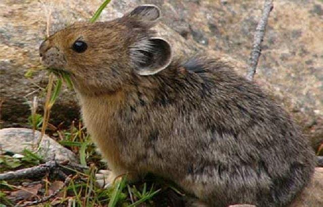 5 loài động vật có nguy cơ tuyệt chủng vì biến đổi khí hậu - Ảnh 3.
