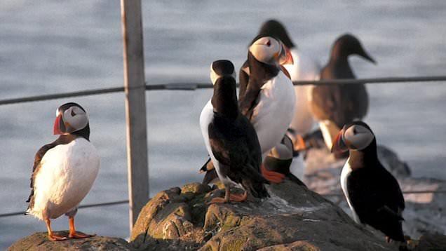 Hòn đảo này có một loài chim siêu dễ thương, vừa trở về từ cõi chết khiến giới khoa học vui mừng khôn xiết - Ảnh 1.