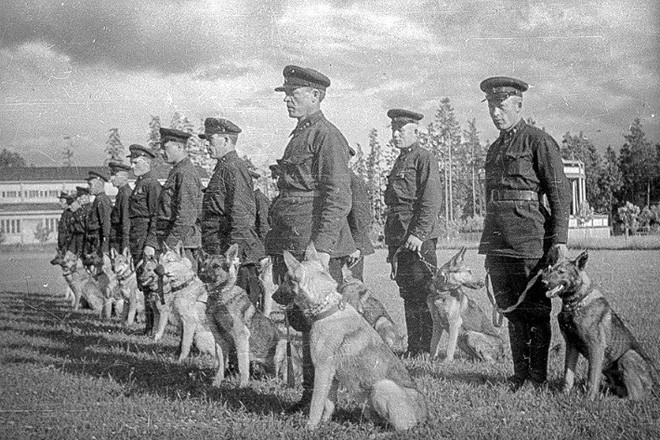 Liên Xô đã sử dụng chó cảm tử đánh thắng Đức Quốc xã như thế nào? - ảnh 1