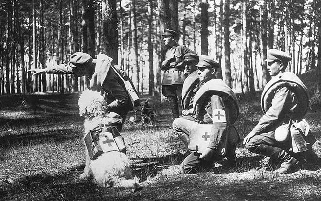 Liên Xô đã sử dụng chó cảm tử đánh thắng Đức Quốc xã như thế nào? - ảnh 2