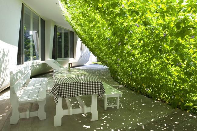 Ngôi nhà vườn hình thuyền độc đáo với điểm nhấn từ giàn cây leo xanh tươi mát mắt ở Nhật Bản - Ảnh 3.