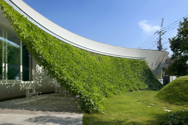 Ngôi nhà vườn hình thuyền độc đáo với điểm nhấn từ giàn cây leo xanh tươi mát mắt ở Nhật Bản - Ảnh 4.