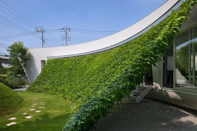 Ngôi nhà vườn hình thuyền độc đáo với điểm nhấn từ giàn cây leo xanh tươi mát mắt ở Nhật Bản - Ảnh 5.