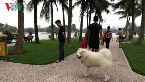 Kinh hãi chó không rọ mõm chạy rông trong công viên Thống Nhất - Ảnh 1.