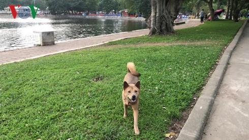 Kinh hãi chó không rọ mõm chạy rông trong công viên Thống Nhất - Ảnh 13.