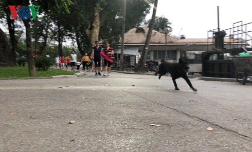Kinh hãi chó không rọ mõm chạy rông trong công viên Thống Nhất - Ảnh 15.