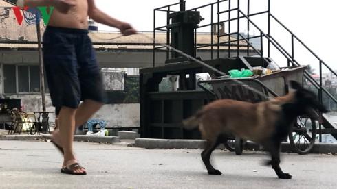 Kinh hãi chó không rọ mõm chạy rông trong công viên Thống Nhất - Ảnh 16.