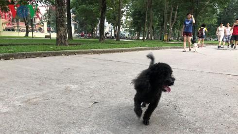 Kinh hãi chó không rọ mõm chạy rông trong công viên Thống Nhất - Ảnh 17.