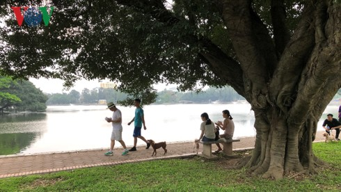 Kinh hãi chó không rọ mõm chạy rông trong công viên Thống Nhất - Ảnh 19.