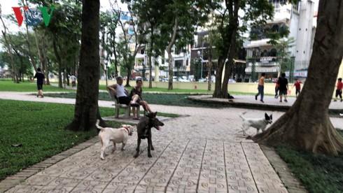 Kinh hãi chó không rọ mõm chạy rông trong công viên Thống Nhất - Ảnh 21.