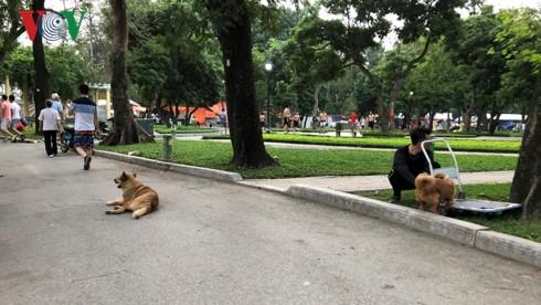 Kinh hãi chó không rọ mõm chạy rông trong công viên Thống Nhất - Ảnh 5.