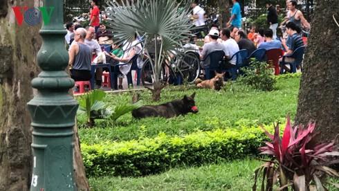 Kinh hãi chó không rọ mõm chạy rông trong công viên Thống Nhất - Ảnh 6.