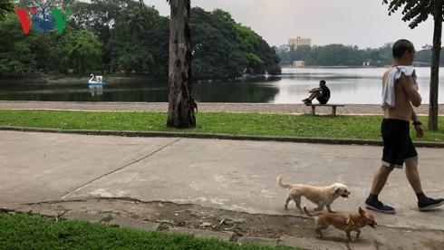 Kinh hãi chó không rọ mõm chạy rông trong công viên Thống Nhất - Ảnh 8.