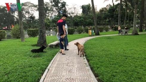 Kinh hãi chó không rọ mõm chạy rông trong công viên Thống Nhất - Ảnh 9.