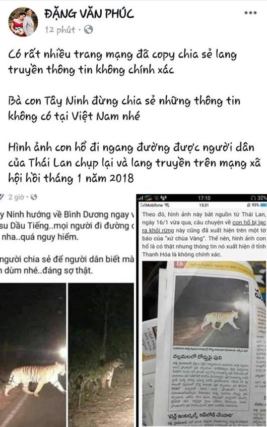 Sự thật thông tin hổ xuất hiện ở Phú Quốc, Thanh Hóa, Tây Ninh - Ảnh 3.