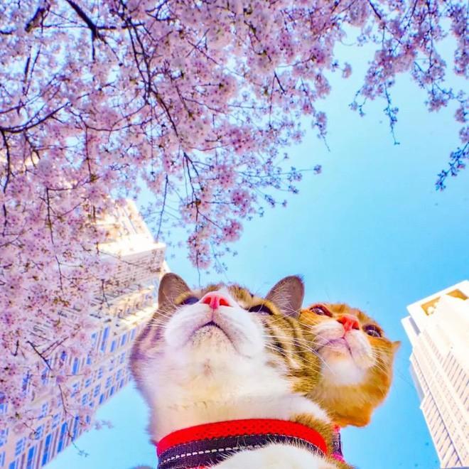 Dân mạng phát hờn với 2 boss mèo được vác đi khắp Nhật Bản: Cảnh đẹp như mơ mà chỉ lo ngáp với ngủ - Ảnh 3.