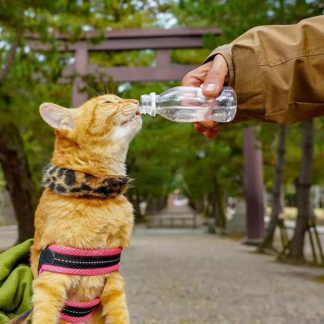 Dân mạng phát hờn với 2 boss mèo được vác đi khắp Nhật Bản: Cảnh đẹp như mơ mà chỉ lo ngáp với ngủ - Ảnh 13.