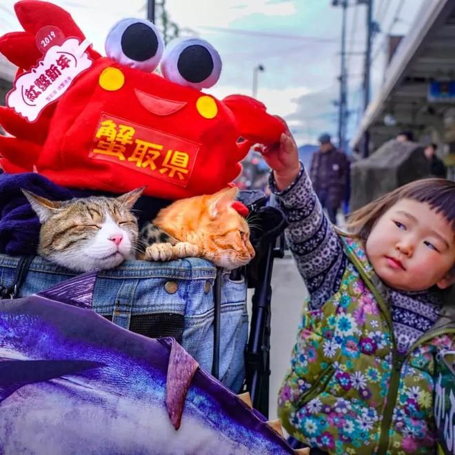 Dân mạng phát hờn với 2 boss mèo được vác đi khắp Nhật Bản: Cảnh đẹp như mơ mà chỉ lo ngáp với ngủ - Ảnh 4.