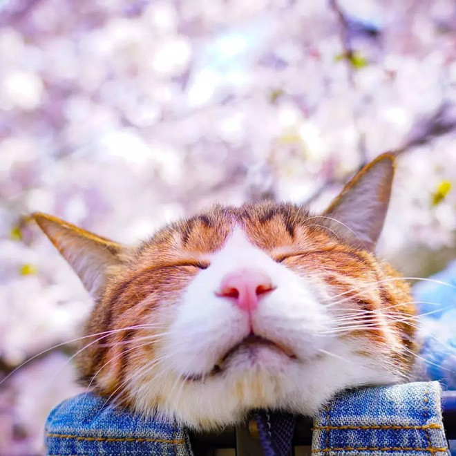 Dân mạng phát hờn với 2 boss mèo được vác đi khắp Nhật Bản: Cảnh đẹp như mơ mà chỉ lo ngáp với ngủ - Ảnh 9.