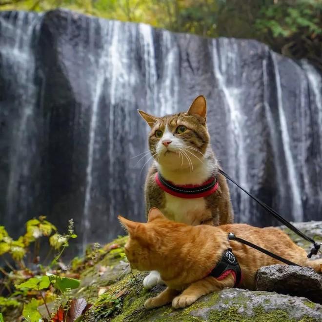 Dân mạng phát hờn với 2 boss mèo được vác đi khắp Nhật Bản: Cảnh đẹp như mơ mà chỉ lo ngáp với ngủ - Ảnh 10.