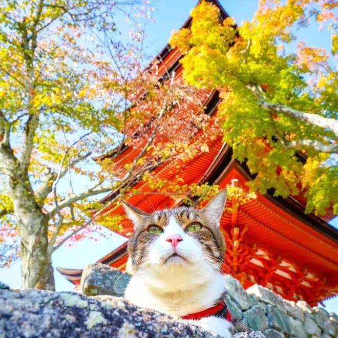 Dân mạng phát hờn với 2 boss mèo được vác đi khắp Nhật Bản: Cảnh đẹp như mơ mà chỉ lo ngáp với ngủ - Ảnh 11.