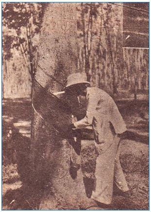 Một cổ hai tròng: Nông dân Việt Nam khốn khổ cả vì phong kiến lẫn thực dân - Ảnh 3.