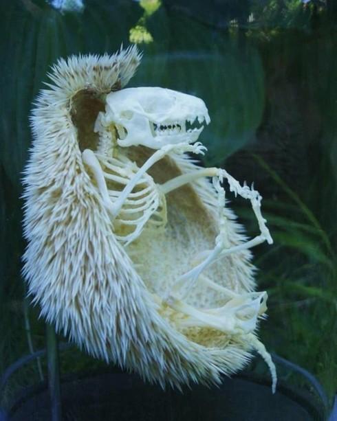 Những bức ảnh kỳ thú chứng minh tự nhiên muôn vàn bí ẩn - Ảnh 8.