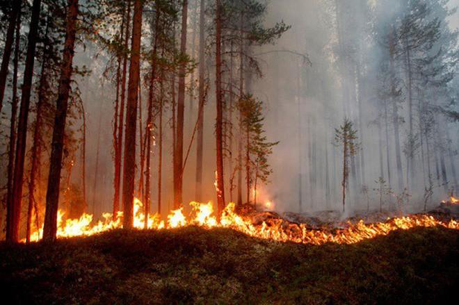 Cần gấp rút trả lại 50% đất đai cho tự nhiên thì mới mong chặn được thảm họa khí hậu đang xảy ra - Ảnh 6.