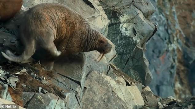Hải mã băng mình xuống vách núi tự tử: Thước phim nghiệt ngã cảnh báo thảm họa toàn cầu - Ảnh 3.