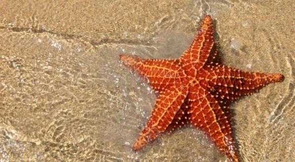 Đây là cách con sao biển tản bộ bên bờ biển, tốc độ 1m/phút - Ảnh 1.