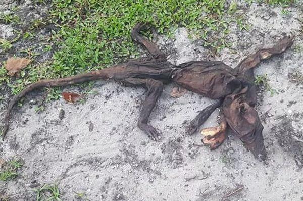 Cái xác khô quắt đáng sợ mà cô Kelly Garrahan phát hiện trong vườn nhà.