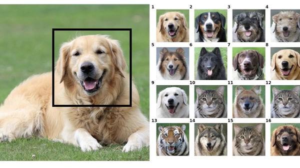 Công cụ đổi mặt này có thể biến thú cưng của bạn thành bất cứ con vật nào - Ảnh 1.