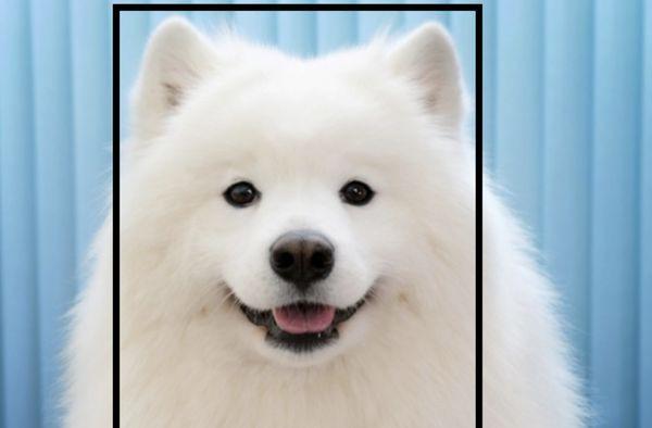 Công cụ đổi mặt này có thể biến thú cưng của bạn thành bất cứ con vật nào - Ảnh 6.