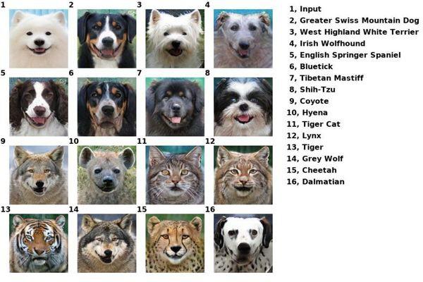 Công cụ đổi mặt này có thể biến thú cưng của bạn thành bất cứ con vật nào - Ảnh 7.