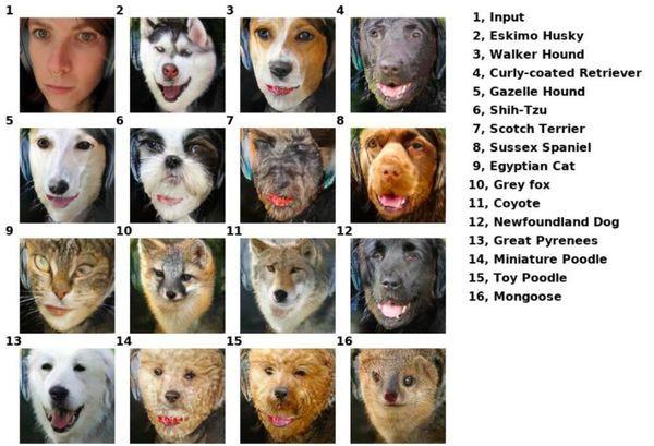 Công cụ đổi mặt này có thể biến thú cưng của bạn thành bất cứ con vật nào - Ảnh 8.