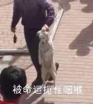 MXH Trung Quốc xôn xao vì một chú chó: Đòi chụp kỷ yếu, chạy thi cùng sinh viên - ảnh 4