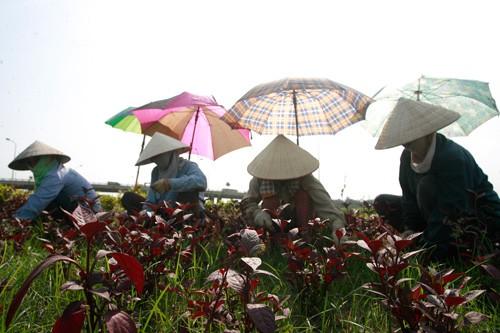 photo 1 1557063196716582328591 - Cách tránh mất nước cơ thể vào mùa nắng nóng