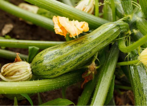 Chuyên gia dinh dưỡng chỉ ra những loại trái cây và rau quả bổ dưỡng nhất - Ảnh 8.