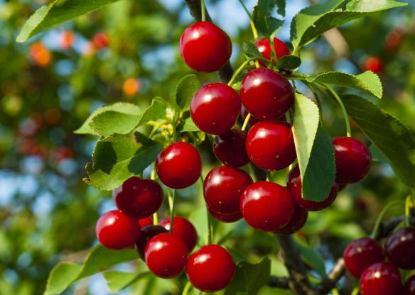 Chuyên gia dinh dưỡng chỉ ra những loại trái cây và rau quả bổ dưỡng nhất - Ảnh 9.