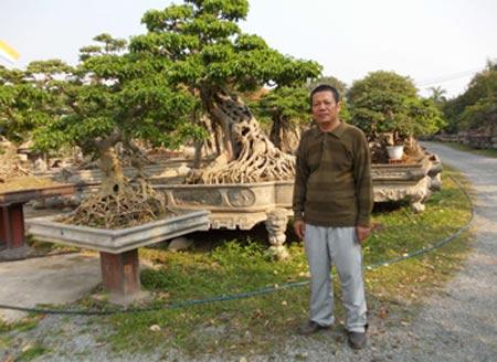 cây-cảnh, đại-gia, chơi-cây, Phú-Thọ, Vĩnh-Phúc, tiền-tỷ, sưu-tập đồ-cổ, Phiến cá