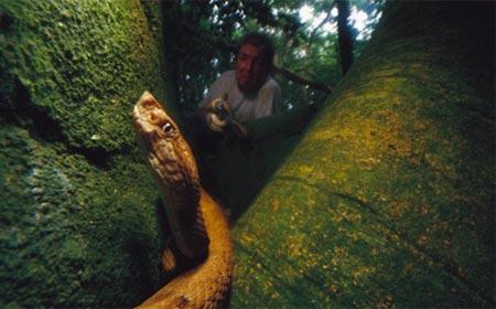 rắn vipe, cực độc, nhất thế giới, đảo cấm, đảo rắn, Brazil