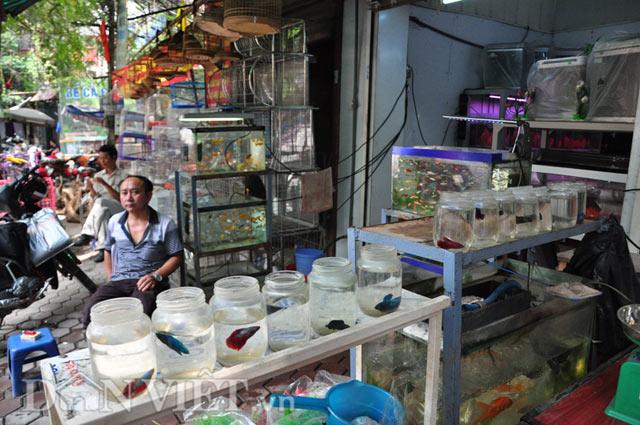 Ngoài việc sở hữu hàng chục con cá chọi thuộc hàng hiếm, ông Hiệp còn bán nhiều loại cá khác như cá koi Nhật Bản, cá Huyết Long trị giá hàng chục triệu đồng…