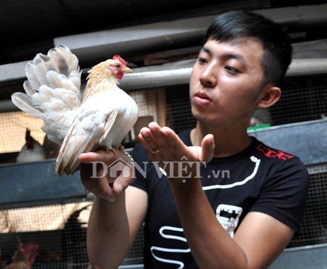 Để có được những chú gà Serama đẹp, anh Huế phải thường xuyên tập luyện và chăm sóc gà rất cẩn thận.