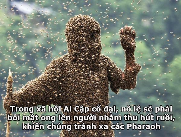 Mật ong là loại thực phẩm tuyệt ngon, nhưng không phải lúc nào cũng tốt...