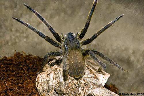 quái vật, nọc độc, giết người, ong bắp cày, hổ mang chúa, rắn độc