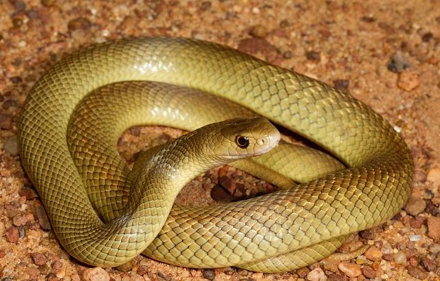 Image result for rắn