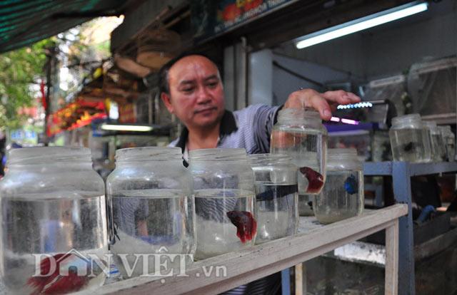 """""""Mấy năm gần đây ở Việt Nam cá chọi khá nhiều nên giá cũng mềm hơn, trung bình chỉ cần bỏ ra 100.000 đến 400.000 đồng, người chơi cá có thể rinh về một chiến binh thuộc hàng đẹp, đánh tốt"""" – ông Hiệp chia sẻ."""