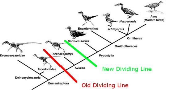 Quá trình tiến hóa từ khủng long thành loài chim ngày nay.