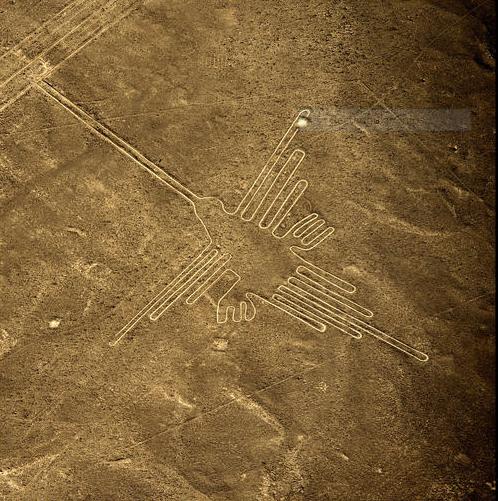 Hình ảnh con chim ruồi ở Nazca